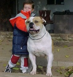 johnson american bulldog puppies for sale | Zoe Fans Blog