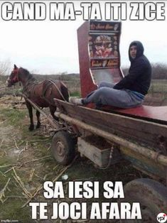 Funny Things, Haha, Funny Memes, Internet, Horses, Watch, Comics, Animals, Funny Stuff