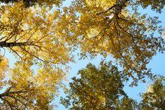 All Hail Autumn by George Mischenko - Photo 131241619 - 500px