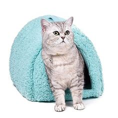 Blue Sweet Lovely Style Cat Bed Small Pet House Kitten Cushion Mats Sofa Cat Living Pet Place to Sleep *** More info could be found at the image url.