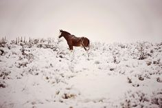 Horse in snow 3 Event Photography, Senior Photography, Children Photography, Newborn Photography, Family Photography, Amazing Photography, Horses In Snow, Moose Art, Facebook
