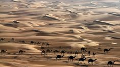 Visit a fascinating camel farm and test your surfing skills by trying out sandboarding on the dunes! Dubai Safari, Subject Of Art, Plant Crafts, Dubai Desert, The Dunes, Arts And Crafts Projects, United Arab Emirates, Abu Dhabi, Surfing