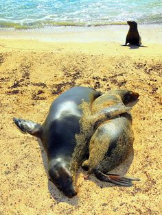 The Galapagos Islands. US Residents can WIN a trip for TWO! Click to enter now ---> http://www.lan.com/onlyinsouthamerica/countdown/?utm_source=blogger&utm_medium=mappingmegan&utm_campaign=Countdown+to+South+America