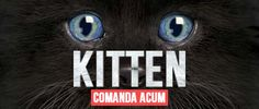 Mountain, Cats, Gatos, Kitty, Cat, Cats And Kittens, Kittens