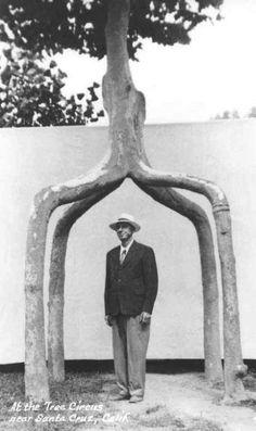 Axel Erlandon (1884-1964), creador de 'Jardines ornamentales' y esculturas con árboles
