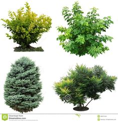 thumbs.dreamstime.com z trees-bushes-izolated-isolated-shrubs-additional-format-png-48347444.jpg