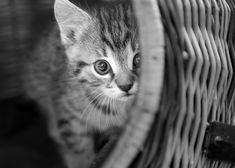stadt4.0 - Das Bürgernetzwerk Cat Basket, Baby Cats, Photo Library, Baby Photos, Seo, Stock Photos, Black And White, Animals, Babys
