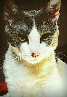 Mi gatito Tommy