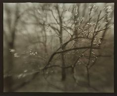 Josef Sudek.  Just beautiful...