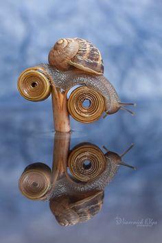 Snail by Olga Viarenich on 500px