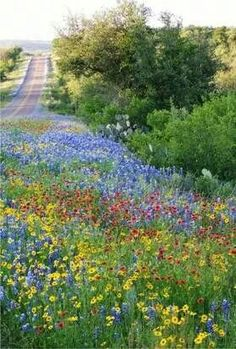 Head for the Hill Country in April to see fields bursting with color from wildflowers: Few people realize just how incredibly vibrant the hills of Texas can be in spring. Join our Texas Hill Country cycling tour next season! Beautiful World, Beautiful Places, Beautiful Pictures, Texas Hill Country, Country Roads, Texas Bluebonnets, Blue Bonnets, Pathways, Belle Photo