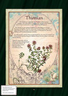 Thymian - Thymiantee