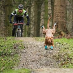 MTB Dirty @rubythetraildog When your so excited to wear your new @ruffwear boots that you overshoot the jump #froglegs @sclulow03