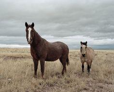 Incantevole foto di Nich Hance McElroy, giovane fotografo di 26 anni  http://www.bloggokin.it/2012/09/24/le-suggestioni-di-nich-hance-mcelroy/