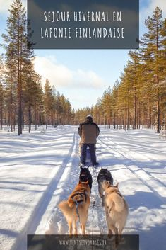 Séjour hivernal en Laponie
