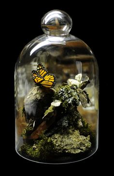 "lifebender: "" Monarch butterfly and Tobacco Horn Moth bell jar/cloche Apothecary Jars, Mason Jars, Cloche Decor, Butterfly Taxidermy, The Bell Jar, Bell Jars, Glass Bell Jar, Deco Floral, Monarch Butterfly"