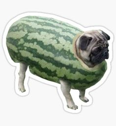 funny pictures of pugs - Bing images Pugs In Costume, Pet Costumes, Animals And Pets, Funny Animals, Cute Animals, Pugs Tumblr, Cute Puppies, Cute Dogs, Amor Pug