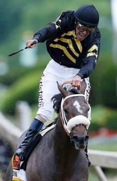 Gary Stevens (Oxbow) just won the 2013 Preakness Stakes.only months after a 7 year retirement, at the age of And as for Oxbow, he was never factored to even be a contender by the racing public! Preakness Winner, Preakness Stakes, Calumet Farm, Derby Horse, Sport Of Kings, Animal Magic, Thoroughbred Horse, Racehorse, Courses