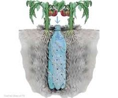 Well here's a good idea for watering plants. Underground Self Watering Recycled Bottle System - Potted Vegetable Garden Lif. Outdoor Projects, Garden Projects, Diy Projects, Container Gardening, Gardening Tips, Container Plants, Vegetable Gardening, Organic Gardening, Bucket Gardening