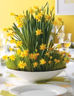fresh home ideas for a more extravagant easter - how to make a daffodil centerpiece #Easter #Center Piece #Flowers