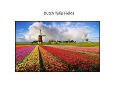 I have used this 7 slide Power Point in my second grade art classroom. The presentation goes over a little history of tulips in Holland. Several slides look at the fields from above, and then from the ground, showing the diminishing rows. Horizon Line, Vanishing Point, and one-point perspective are discussed.