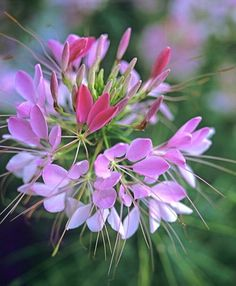 Flowers to Attract Beautiful Moths