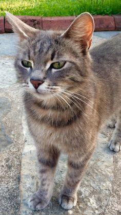 Pretty smoky-colored kitty