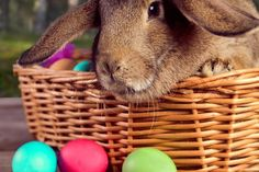 Stock image of 'Beautiful brown rabbit sits in a basket with colored eggs outdoor, close-up'