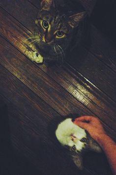Evler kedisiz yetim, sokaklar kedisiz üvey sayılır...