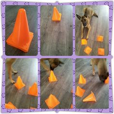 dog training,teach your dog,dog learning,dog tips,dog hacks Brain Games For Dogs, Dog Games, Animal Games, Diy Dog Toys, Pet Toys, Diy Puzzle Toys For Dogs, Dog Enrichment, Dog Puzzles, Toy Puppies