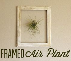 Project 3: Framed Air Plant – Campfire Chic