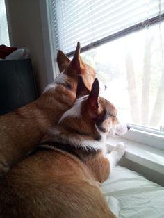 Ein and Apollo in their new favorite spot.