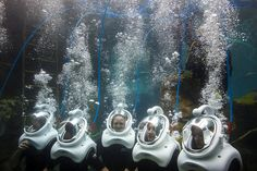 SeaVenture at Discovery Cove!