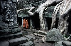On this Arbor Day we're showing our ardor for some pretty impressive roots.  ANGKOR WAT, Cambodia—Monks and the old tree, 1998.