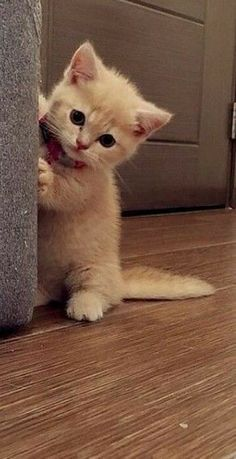 Kittens Cutest Baby, Cute Baby Cats, Cute Little Kittens, Cute Little Animals, Cute Cats And Kittens, Small Kittens, Cute Animals List, Cute Cartoon Animals, Baby Cartoon