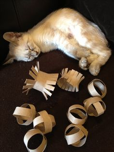 Cat toys made from toilet paper rolls. I have to try this since our Zoe loves TP rolls already.