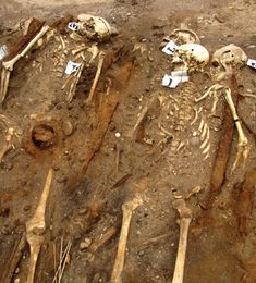 Very Early Viking Burial. The carefully stacked remains of 33 men were buried in the war boat that brought them from Scandinavia to an Estonian island more than a century before the Vikings are thought to have been able to sail across such distances. The archaeologists believe the men died in a battle some time between 700 and 750, perhaps almost as much as a century before the Viking Age officially began. (Courtesy Liina Maldre, University of Tallinn) June 10, 2013, click through