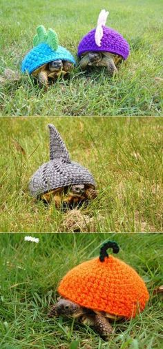 as if i needed ANOTHER reason to get a turtle @Melli-Lou Schmitt We could totally make these!!!