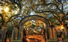Wow. Just wow. The road into Wormsloe, an abandoned plantation in Georgia.