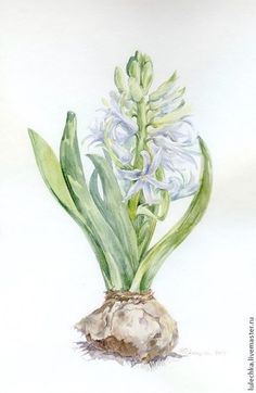 Watercolor painting / Картины цветов ручной работы. Ярмарка Мастеров - ручная работа. Купить Белый гиацинт. Handmade. Салатовый, белый гиацинт, акварель