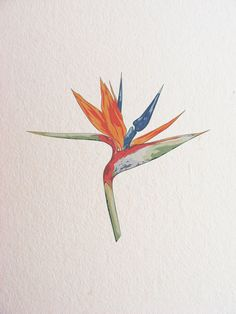 f4516aa2973de 35 Best Bird Of Paradise Tattoo images in 2017 | Bird of paradise ...