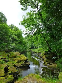 The Strid, Bolton Abbey, Yorkshire...