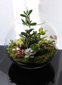 terrarium pflanzen moos glas-gefäss zimmerpflanzen