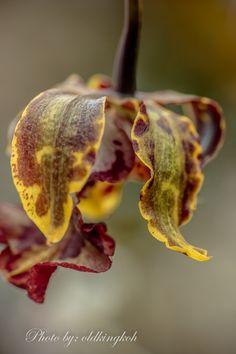 #orchid #flora #gardensbythebay #flowerdome…