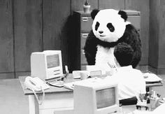 Panda Loose in My Brain: a sound experiment in multi-syllabic rhymes | The View From Winter