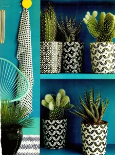 Cactus collection. Cultivate further in 2015