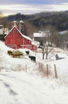 Red barn, cattle and winter snow! Country Barns, Country Life, Country Roads, Country Living, Farm Barn, Old Farm, Pictures Of America, Barn Pictures, Barns Sheds
