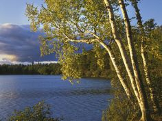 I want to be there!!!   Paper Birch Along Fish Creek Pond at Sunset, New York, USA Photographic Print by Charles Gurche at AllPosters.com