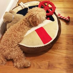 Too adorable - @Aaron Kapor Hensen Prepster  shared this photo of her dog, Teddy, in the #MarthaStewartPets #nautical boat bed.