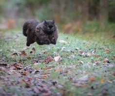 Фотограф Jarkko Järvinen - My cat Mörkö running :) #1719212. 35PHOTO